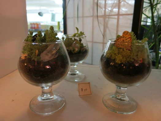 These terrariums ... mean something.